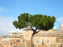 Beautiful view in sunny spring weather in rome with a pine and charming old buildings. And a blue sky stock photos