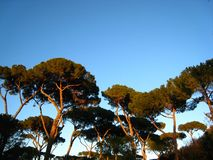 Beautiful view in sunny spring weather in rome with pine trees. Beautiful view in sunny spring weather in rome with pines and a sunset red blue sky stock photos