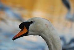 Beautiful view of swan in Hampstead Heath stock photo