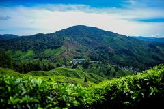 A beautiful view at the tea plantation in Cameron Highland. Malaysia Stock Photo