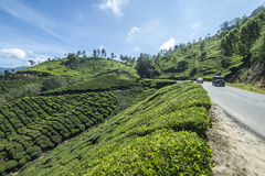 Beautiful view of the tea plantations. In India stock photo
