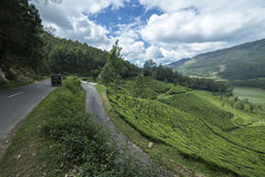 Beautiful view of the tea plantations. In India stock photography