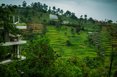 Tea plantations in the suburb of Bandung. Indonesia stock image