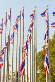 Beautiful view of Thai national flags on the poles at the Queen Royalty Free Stock Photos