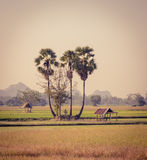 Beautiful view of Thai rural landscape Royalty Free Stock Photography