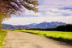Beautiful view to Rigi mountains from forest pathway Stock Images