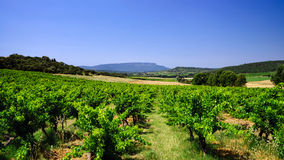 Beautiful view to vineyards in Provence Stock Images