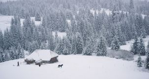 Beautiful view in the top of mountain taking video of a wooden house and horses around in the middle of snowy forest and. Mountain around stock footage