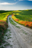 Beautiful view of the tortuous path at sunset in Tuscany Stock Image