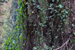 Beautiful view of trees entwined with various plants. Wonderful background royalty free stock photography