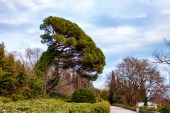 View of garden of Vorontsov Palace in Crimea. Beautiful view of trees in spring in garden next to Vorontsov Castle in Crimea Stock Photos