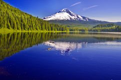 Beautiful view of Trillium lake Stock Images