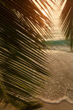 Beautiful view of a tropical beach with palm leaf stock image