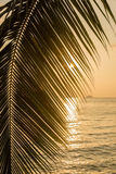 Beautiful view of a tropical beach with palm leaf. Silhouette on sunset Royalty Free Stock Photography