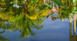 Beautiful view of tropical garden reflected in water upside down with pink flamingo bird walking in water Royalty Free Stock Photos