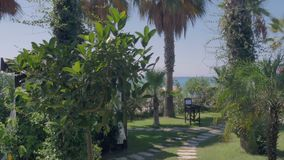 Beautiful view of a tropical green garden on a sunny warm day.  stock video footage
