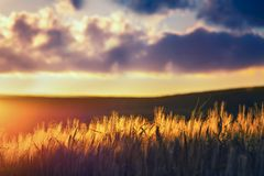 Beautiful view of the typical Tuscan landscape at sunset Royalty Free Stock Image
