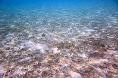 Beautiful view of underwater world with dead coral reefs. Blue water and white sand bottom. Snorkeling. Indian Ocean, royalty free stock photography