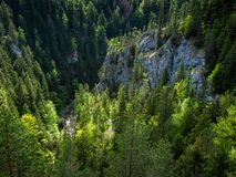Beautiful view, valley, backlight, pure nature, West Tatras, Slovakia royalty free stock photo