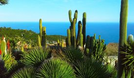 Beautiful view of the village of Eze, a botanical garden with cacti, aloe. Mediterranean, French Riviera royalty free stock image