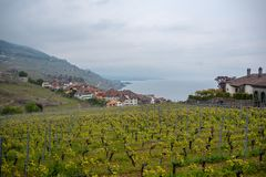 Beautiful view of vineyards in the rural villages of Switzerland on cloudy sky , vintage houses and lake background. With copy space stock photography