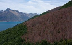 Beautiful view at the Wakatipu Lake and the trees on the way to Ben Lomond near Queenstown in New Zealand royalty free stock images