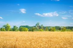 Beautiful view of the wheat field and blue sky in the countryside. Cultivation of crops. Agriculture and farming. Agro industry. Ukraine, Kherson region stock photo