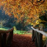 Beautiful view from a wooden forest bridge Stock Photos