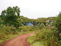 Beautiful views of Africа, trees Avatar,  jeeps with an opening top Stock Photos