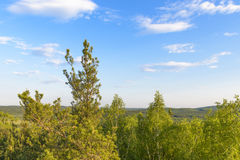 Beautiful views of the forest on background blue sky. Beautiful views of the forest on a background of blue sky Stock Image