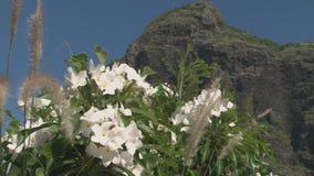 Beautiful views of the mountain stock video