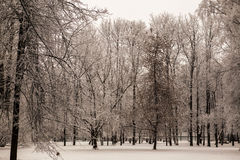 Free Beautiful Views Of Canadian Winter Forest In The Snow At Sunset Frosty Days. Trees Covered In Frost And Snow. Stock Photography - 65236652