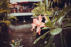 Beautiful villa in Kuta Royalty Free Stock Photos