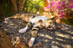 Beautiful village cat resting in the shadow Stock Photos