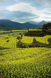 The Beautiful Village of China. Wuyuan, the beautiful village of Chian, the yellow cauliflower grows anywhere at Spring Stock Photography