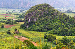 The beautiful Vinales Valley Stock Image