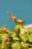 Beautiful vine leaf, Stock Photo
