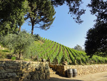 Beautiful Vineyard in California Royalty Free Stock Photo