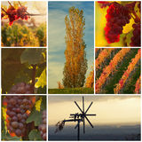 Beautiful vineyard royalty free stock photography