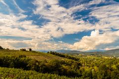 The beautiful vineyard of Collio, Friuli Venezia-Giulia, Italy. The italian vineyards at the border with Slovenia in a summer afternoon royalty free stock photo