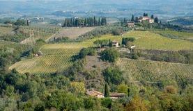 Vineyard fields in San Gimignano, Tuscany area, Italy. Beautiful vineyard fields in San Gimignano,Tuscany area, Italy early in October stock photography