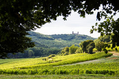 A beautiful vineyard in France with an old castle on the hill. Near the city of Colmar Royalty Free Stock Image