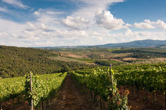 Beautiful vineyard in Italy Royalty Free Stock Images
