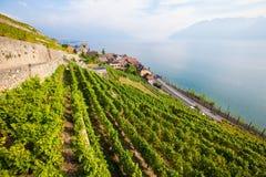 Beautiful vineyard at Lake Geneva Stock Photography