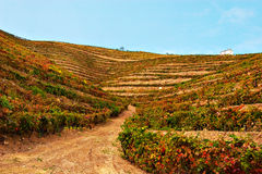 Beautiful Vineyard Landscape. With a blue sky, Douro - Portugal Royalty Free Stock Photography