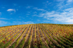 Beautiful Vineyard Landscape. With a blue sky Royalty Free Stock Photography