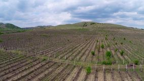 Beautiful vineyard landscape , aerial view stock video footage