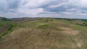 Beautiful vineyard landscape , aerial view stock video