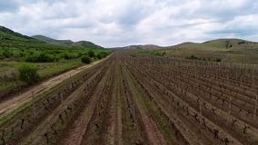 Beautiful vineyard landscape , aerial view stock footage