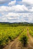 Beautiful Vineyard landscape Stock Image